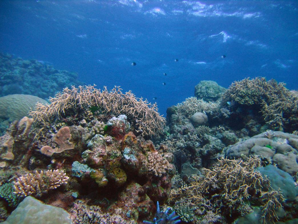 20170426_Australia_Great Barrier Reef