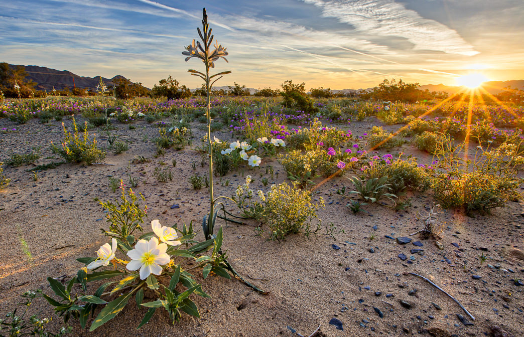 20180315_desert-lily-preserve